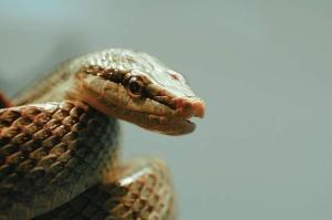 krachtdier slang