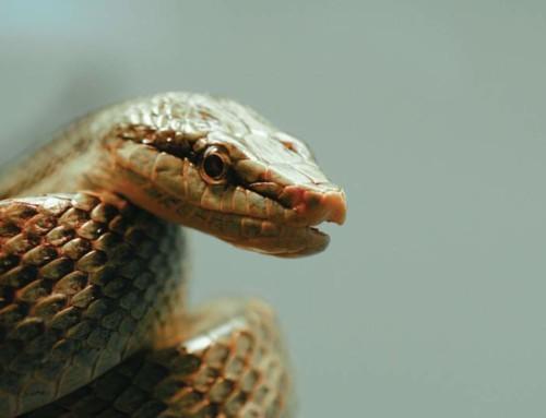 Krachtdier slang helpt loslaten