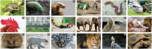 online coachen met dieren
